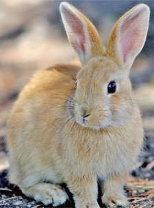 ●○● オレ流 イラレ道場 ●○●-ウサギのトレース